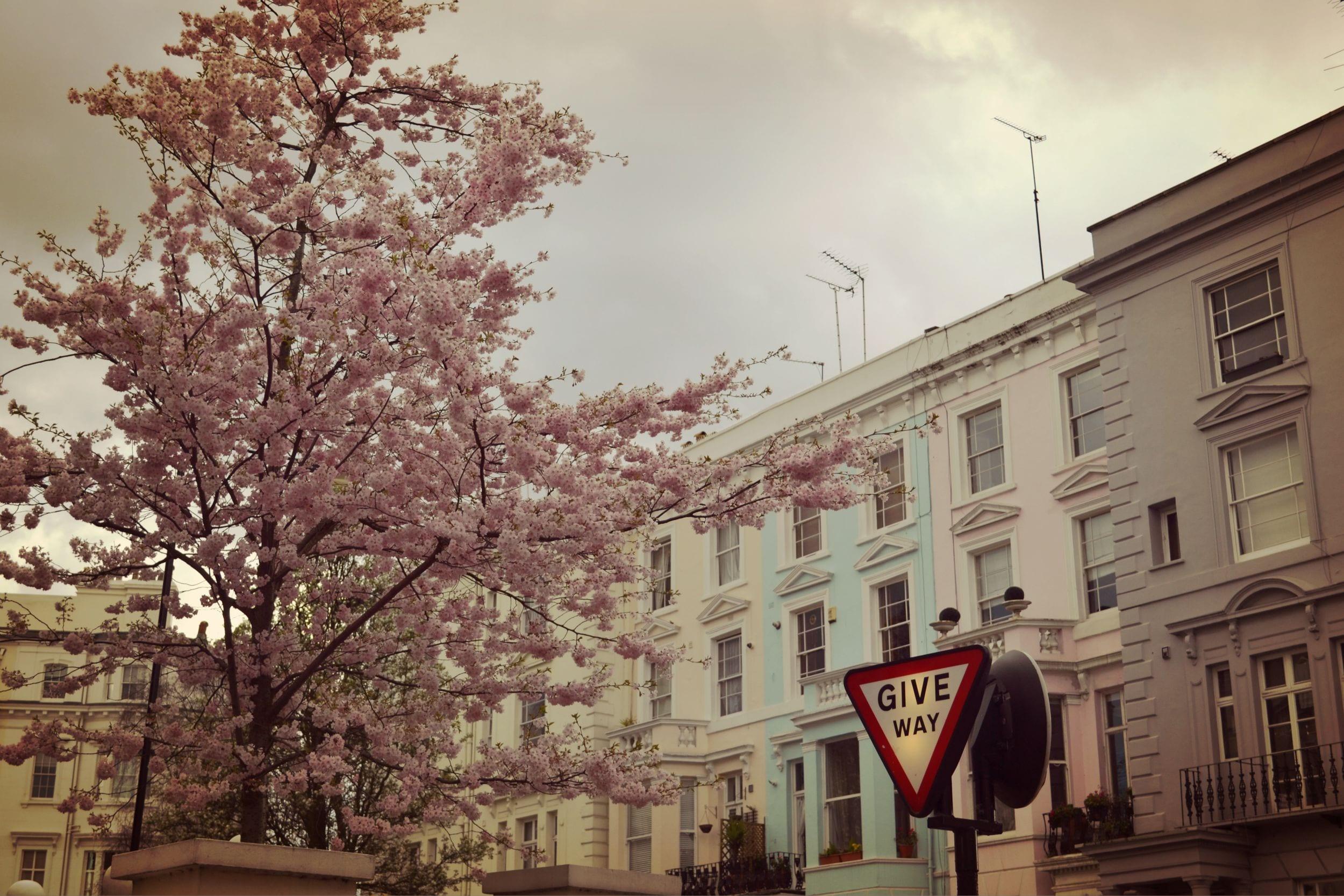 Die Portobello Road ist bekannt für die bunten Häuser und die Kirschblüte im Frühjahr.