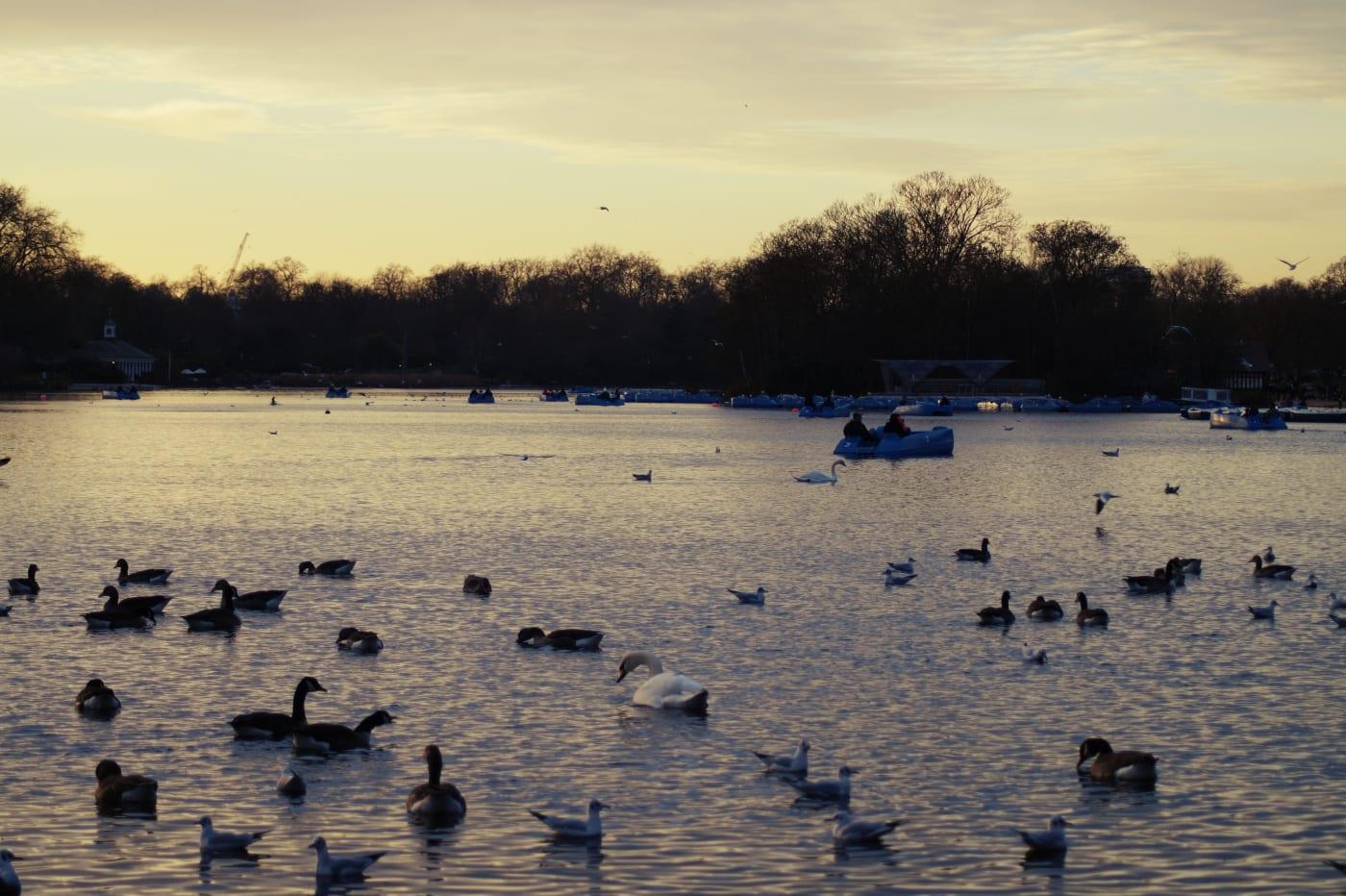 london-hyde-park-tretboot-fahren