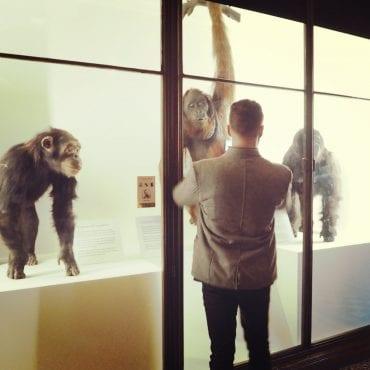 Natural History Museum – Erfahrungsbericht
