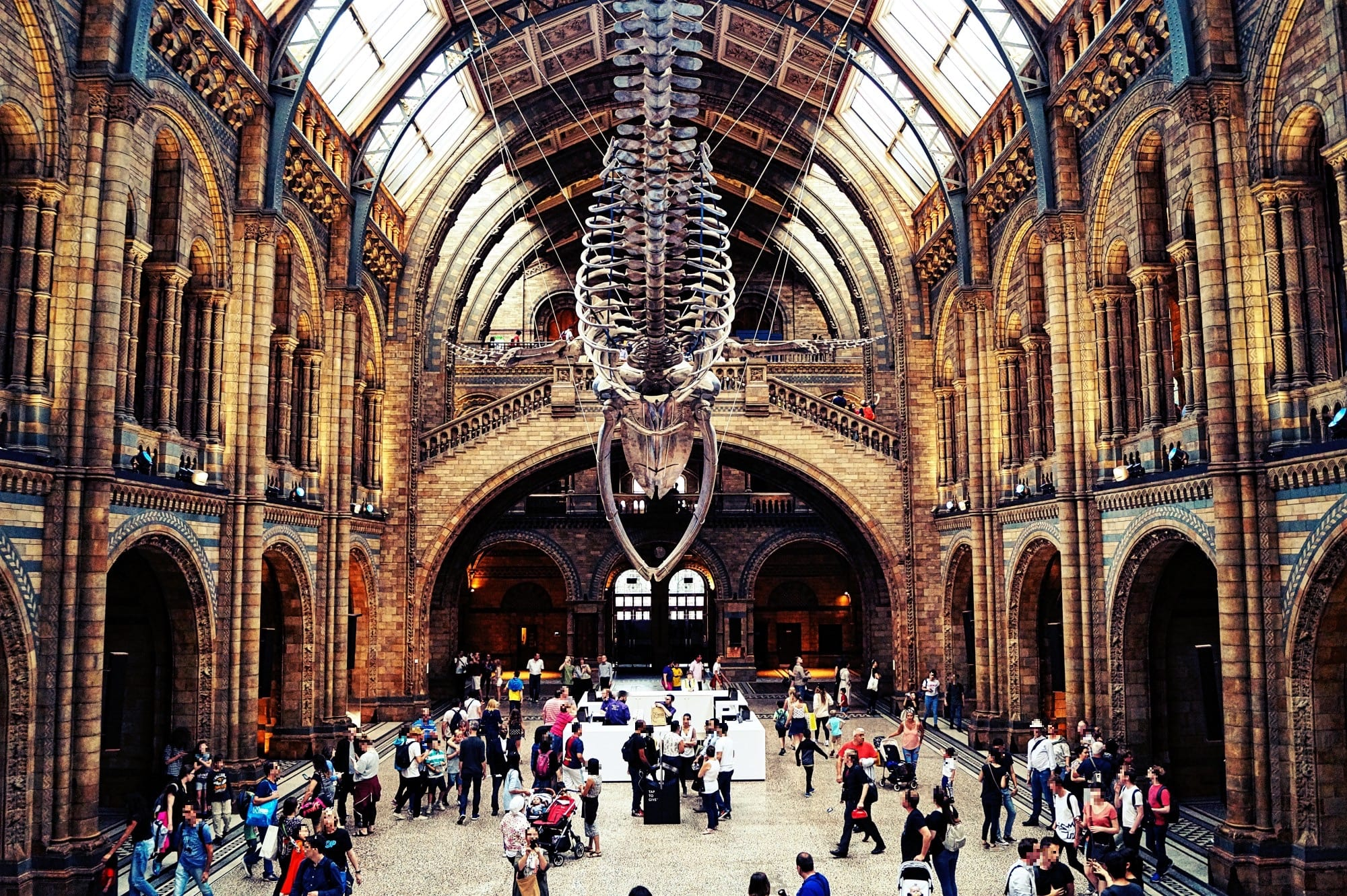 Natural History Museum Evolution Video