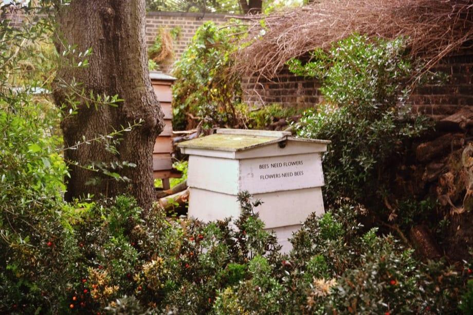 Bienen leben hier auch!