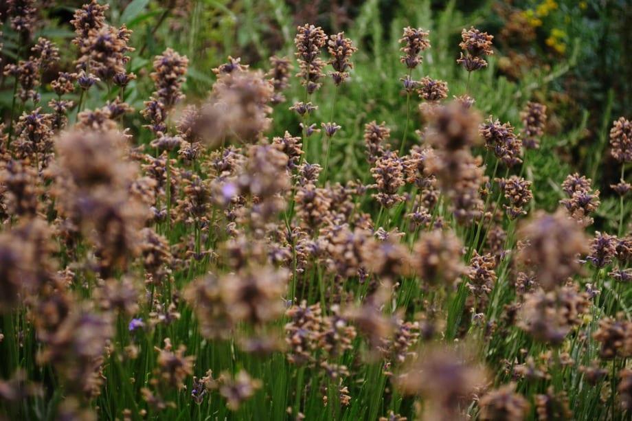 Unterschiedliche Blumen und Pflanzen findet man hier vor.