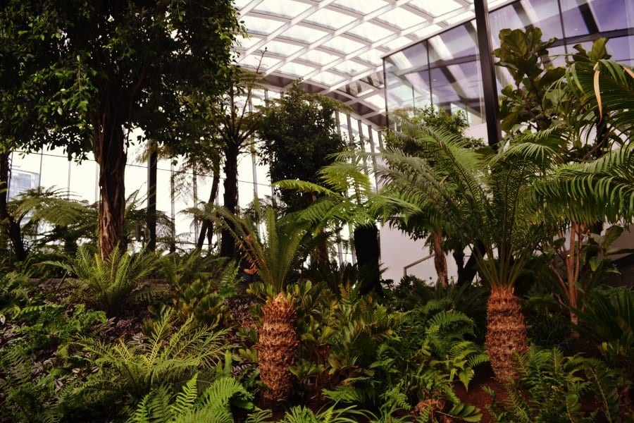 skygarden-london-palme