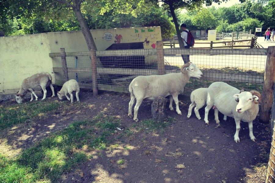 madchute-park-und-farm-goats
