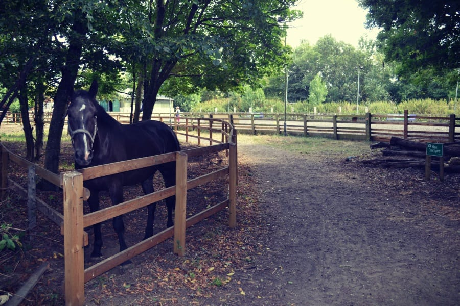 Pferde gibt es hier viele