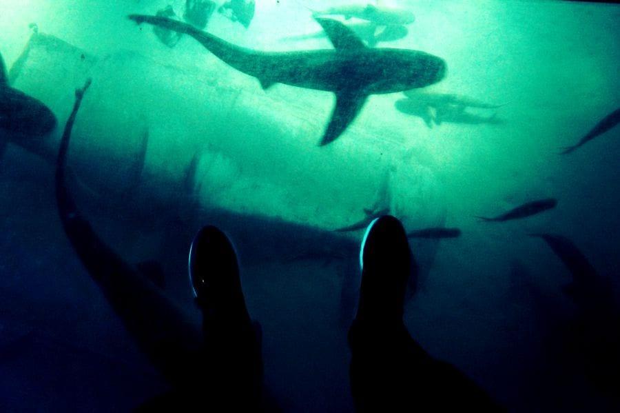 Gleich am Eingang ein Highlight für mich: der Glasboden. - Achtung Haie!