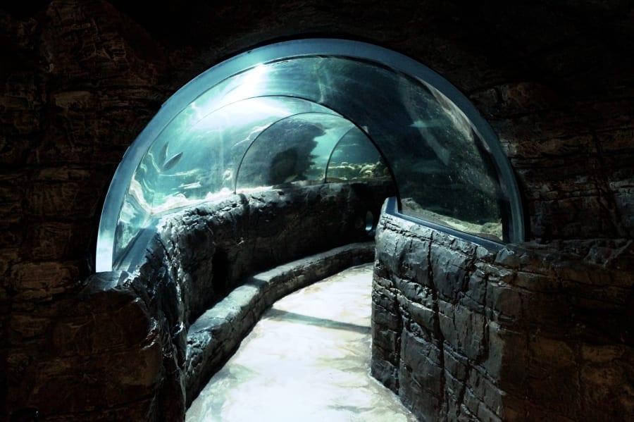 Der Blick in den Glastunnel