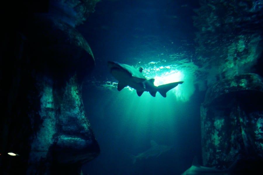 Wer hat Angst vor dem großen Hai?