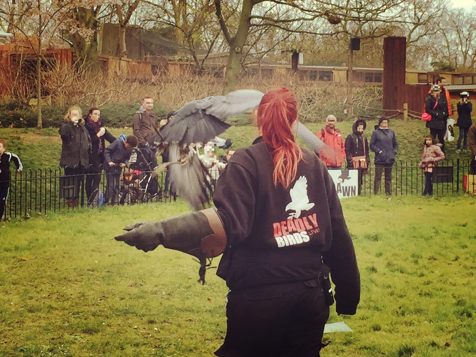 Eine Vorführung der Greifvögel im London Zoo