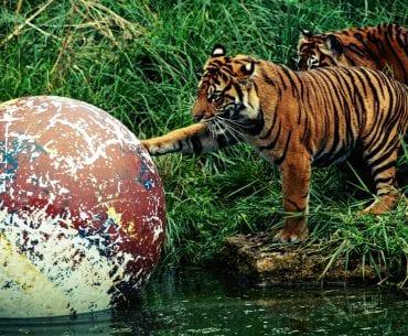 London Zoo Erfahrungsbericht