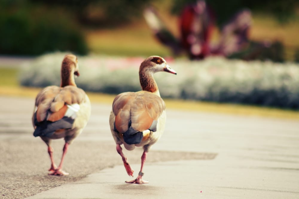Diese beiden machen auch einen Spaziergang durch die Gärten