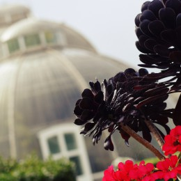 kew-garden-london-palmhouse1