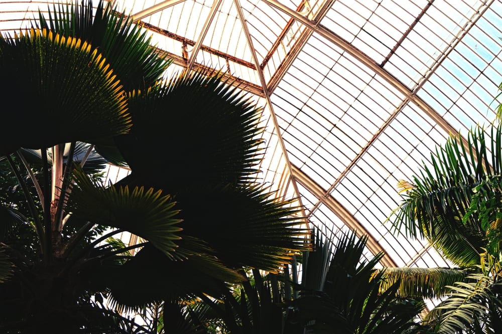 Das Innere vom Palm House
